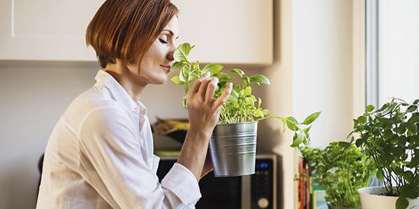 como fazer horta vertical orgânica