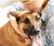 Estudo aponta os benefícios de ter um animal de estimação